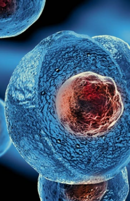 Stem Cell Therapies Contamination Control